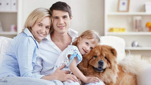 Wills & Trusts dog-young-family Direct Wills Willesden Green
